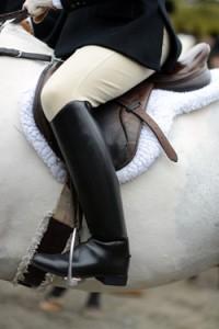 Middleburg VA horse