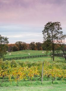 Greenhill Vineyards Middleburg VA