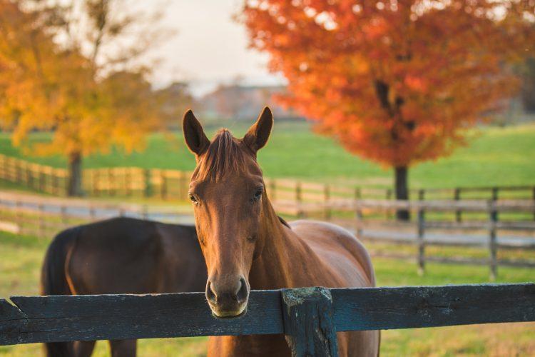 Fall Middleburg VA Horse