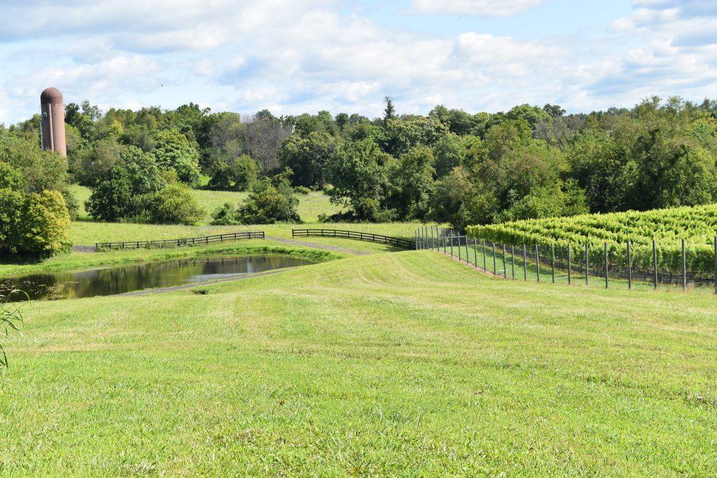 Slater Run Vineyards Upperville VA