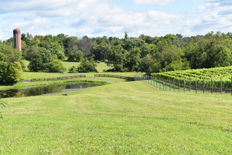 Slater Run Vineyards Upperville VA
