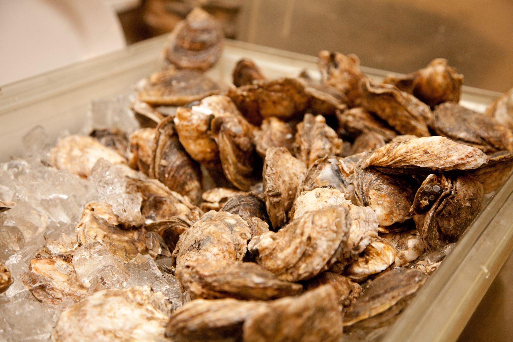 Slater Run Vineyards OysterFest