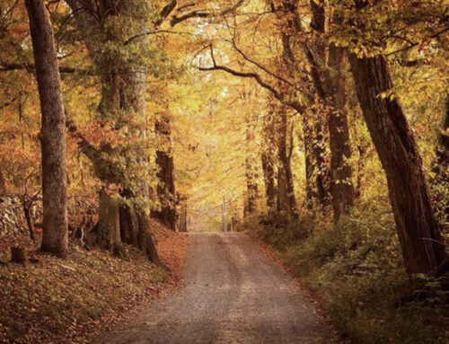 Things to Do in Middleburg in October