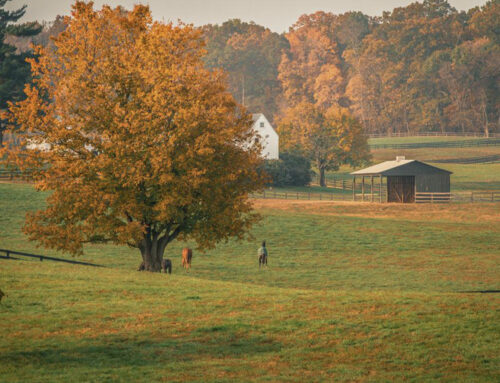 Top Things to Do this Fall in Middleburg